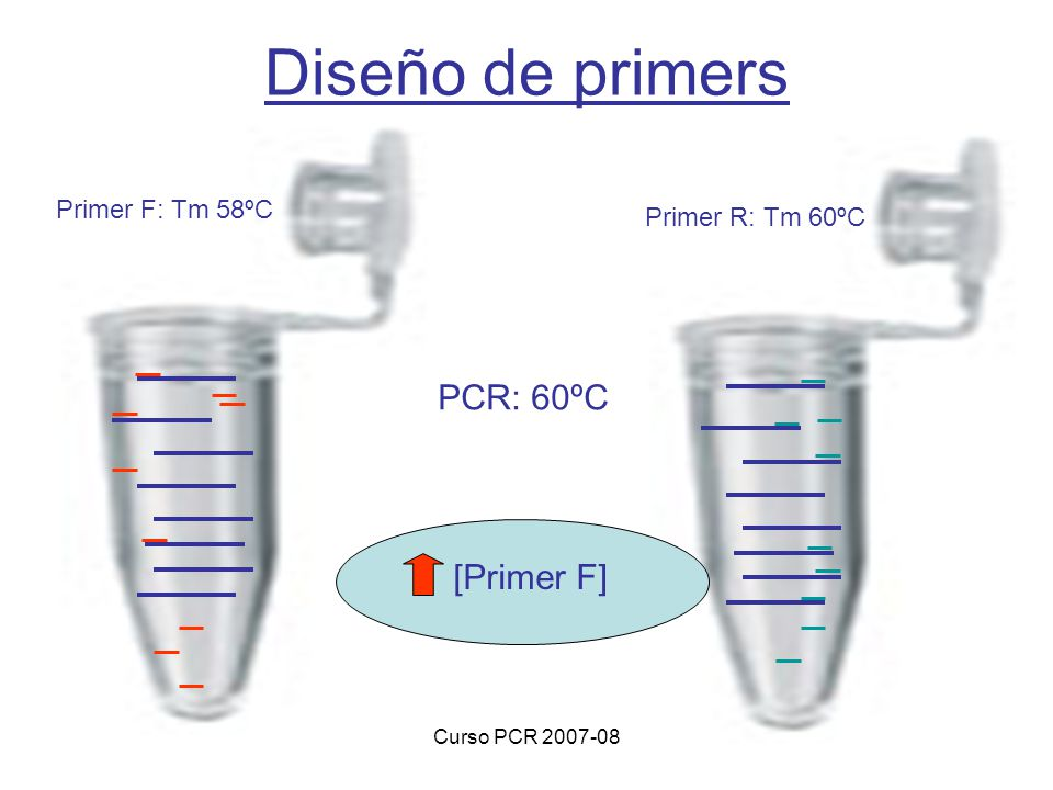 Diseño de primers PCR: 60ºC [Primer F] Primer F: Tm 58ºC